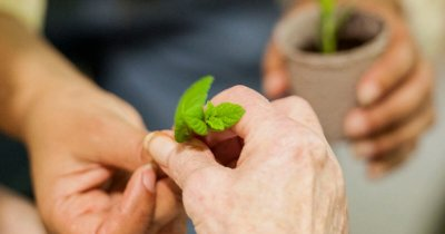 Guest Post: Activities Helping People with Dementia